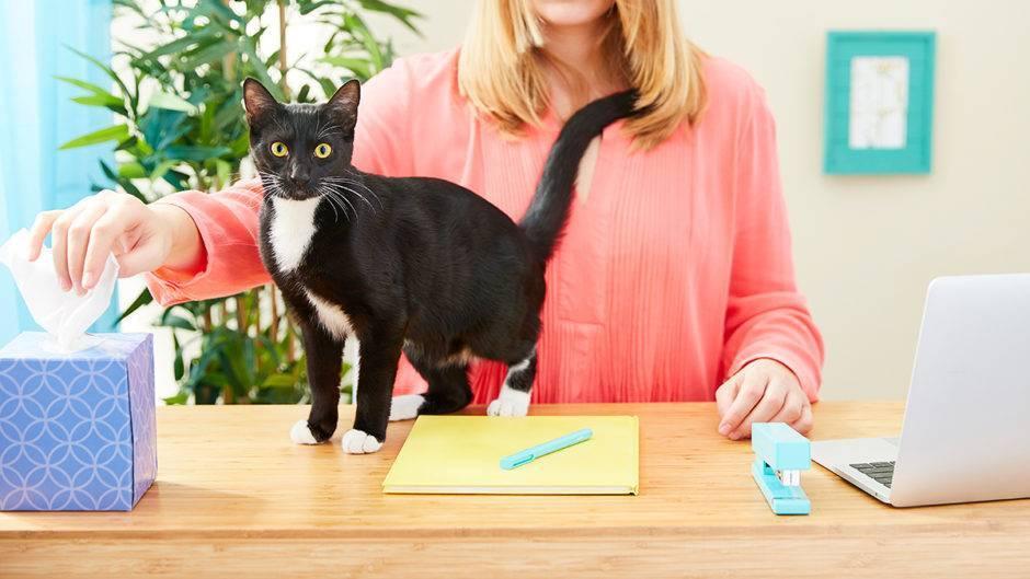 Как кошки благодарят хозяев: 7 способов кошачьего «спасибо» | gafki.ru | яндекс дзен