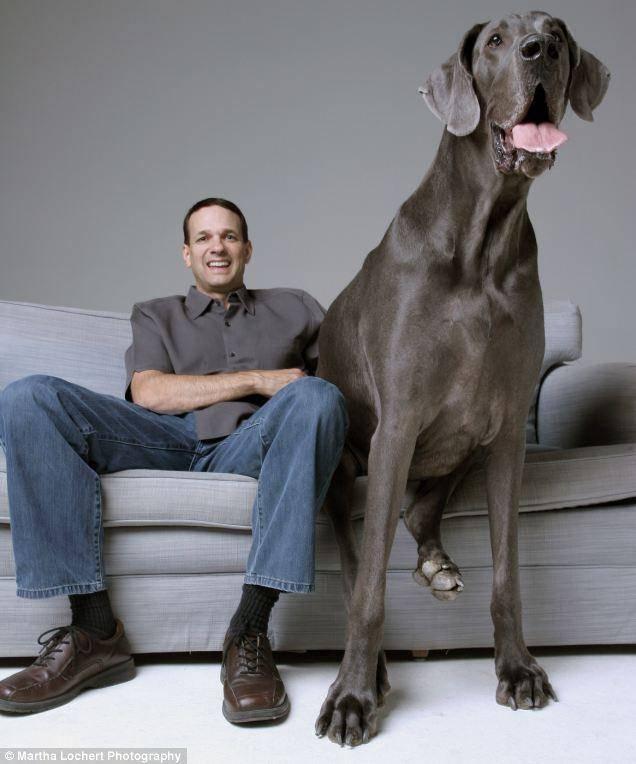 Топ 10 больших пород собак с фотографиями и названиями топ 10 больших пород собак с фотографиями и названиями