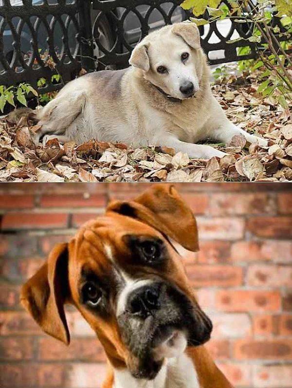 Видят лучше: или почему собаки наклоняют голову, когда мы с ними разговариваем