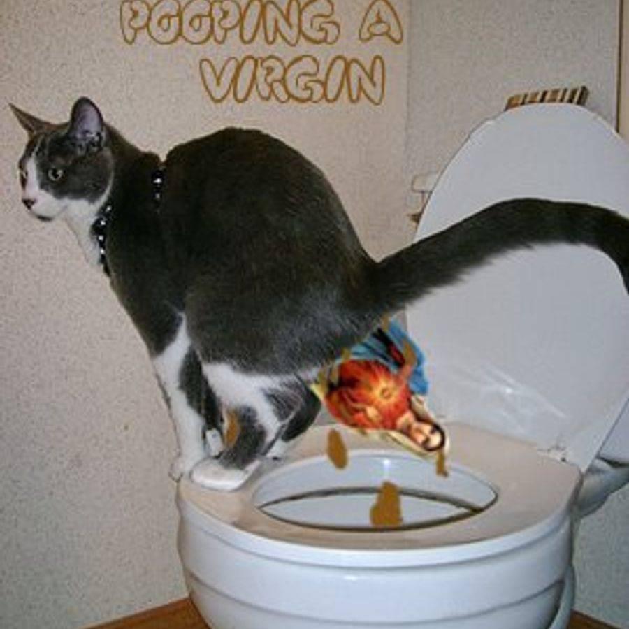Кот покакал с кровью: возможные причины и методы лечения