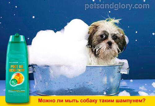 Как часто мыть собаку мелких и крупных пород: частота купания питомца летом и зимой, советы как не навредить