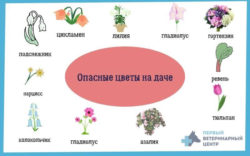 Драцена: названия видов, приметы, суеверия и фото
