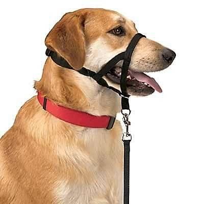 Намордник для собаки. как правильно выбрать и приучить собаку?