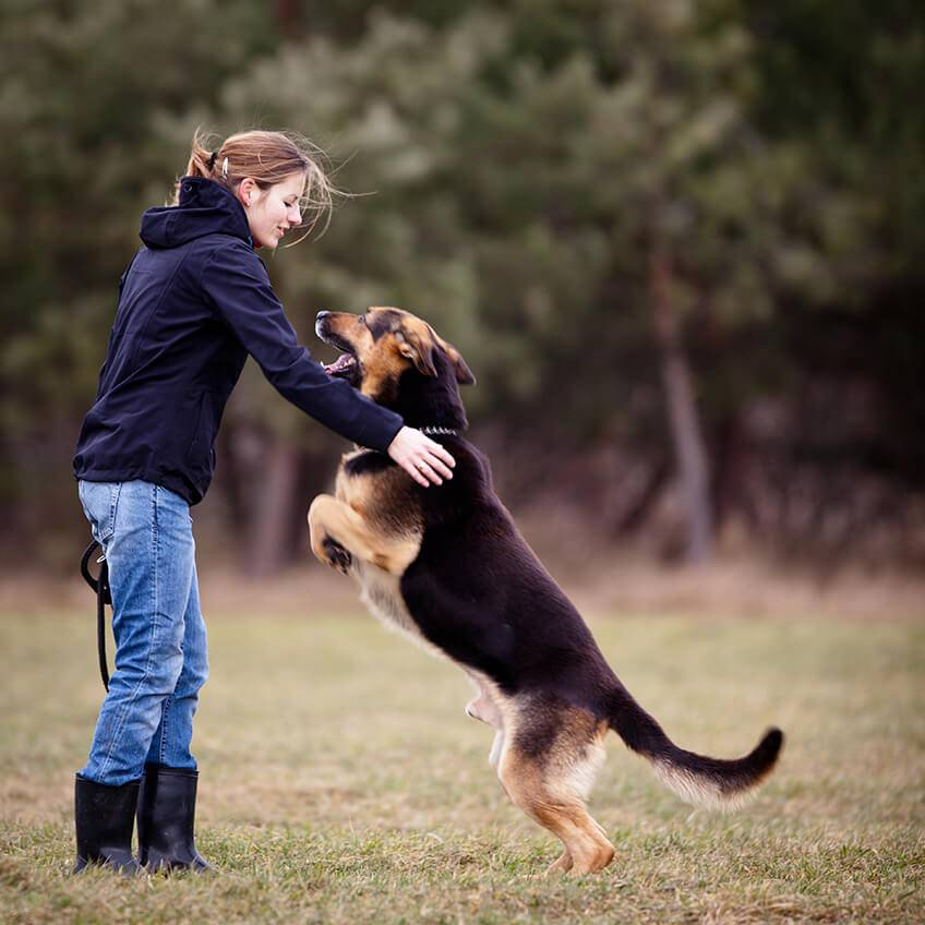 Как отучить собаку прыгать на хозяина: советы