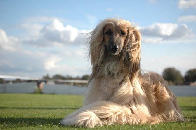 Самая быстрая собака в мире – топ-10 пород