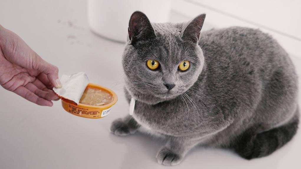 Как помочь кошке в жару: полезные советы как помочь кошке в жару: полезные советы