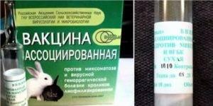 Ассоциированная вакцина для кроликов: как разводить и колоть