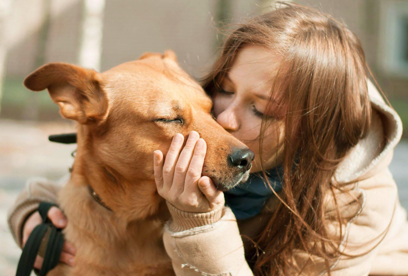 Улыбающаяся собака – какие породы собак могут улыбаться?