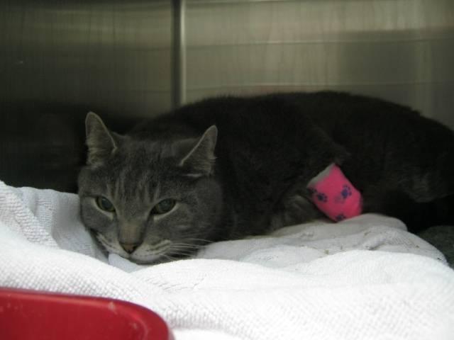 Панкреатит у кошек: ? причины и симптомы, первая помощь, лечение, диета