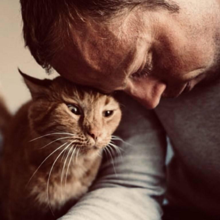 Что думают кошки о своих хозяевах. что думают кошки о людях? способны ли кошки мыслить