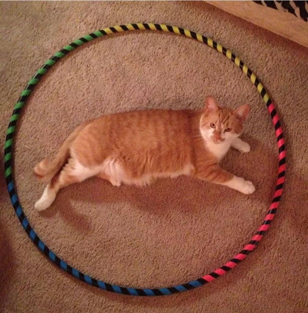 Как поймать кота и пристроить его в дальнейшем