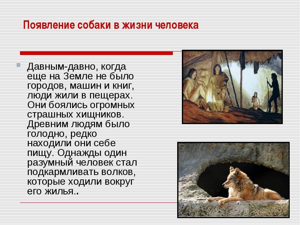 Как появились собаки? теории происхождения. от кого они произошли? история одомашнивания животных
