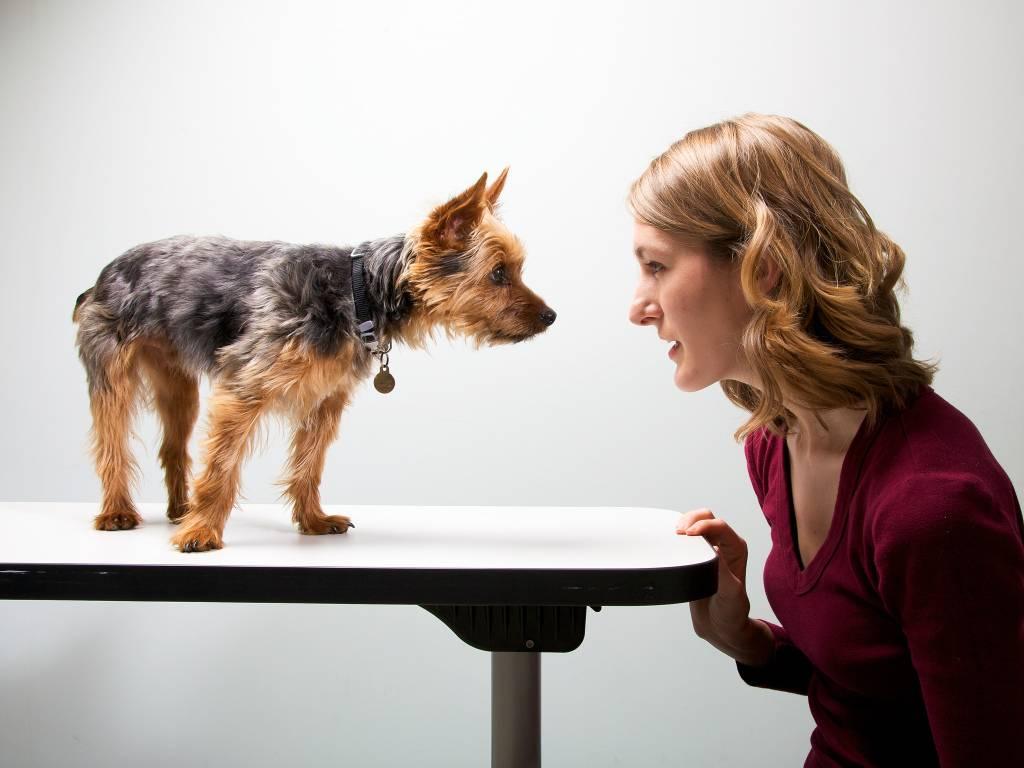 10 пород собак, которые ладят с кошками | hidogs.ru