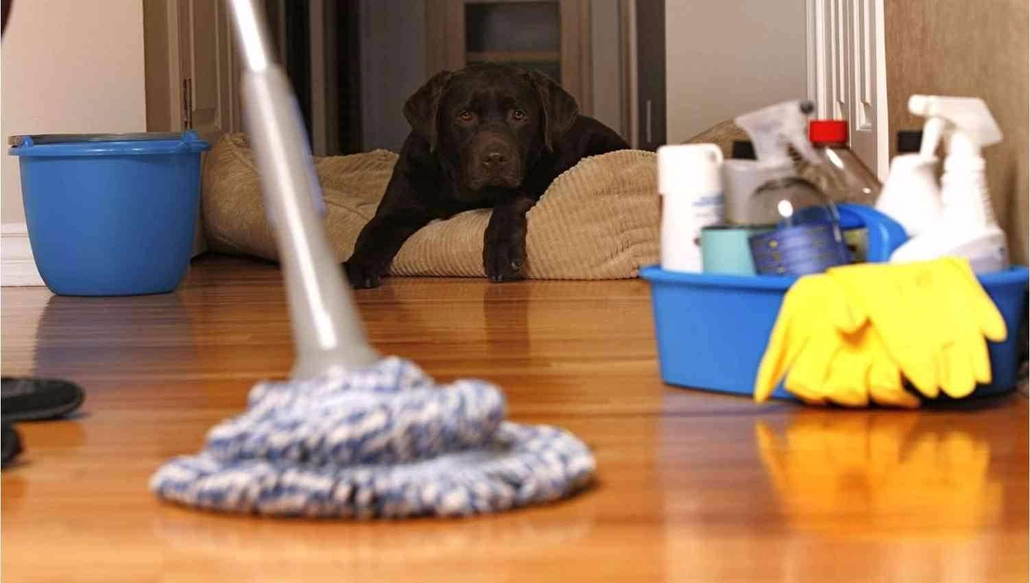 Как избавиться от запаха собаки в доме- лучшие домашние рецепты