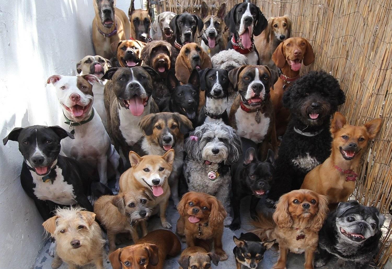 Самая дорогая порода собак в мире – какая она и сколько стоит? | wikiq.ru
