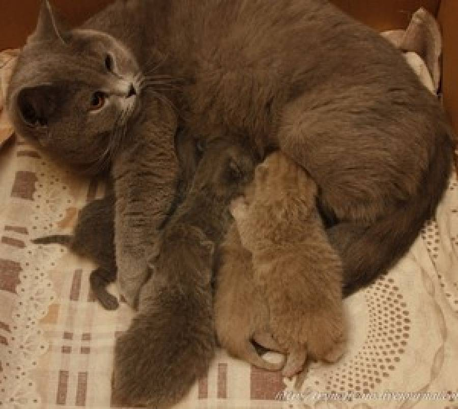 Когда у котят открываются глаза после рождения: через сколько дней малыши их открывают и как это происходит, как ухаживать за глазками