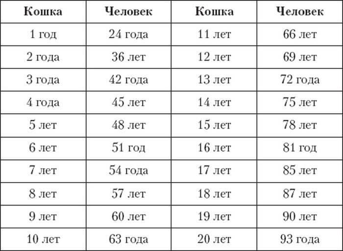 В каком возрасте кошка считается старой | gafki.ru | яндекс дзен