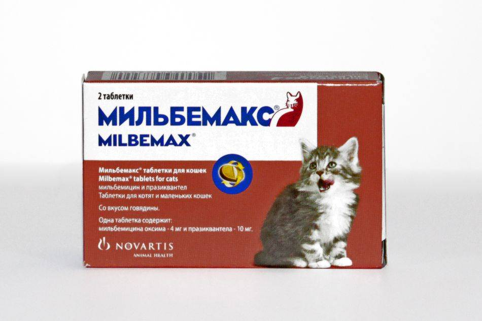 Обзор препарата мильбемакс для кошек: инструкция по применению, отзывы