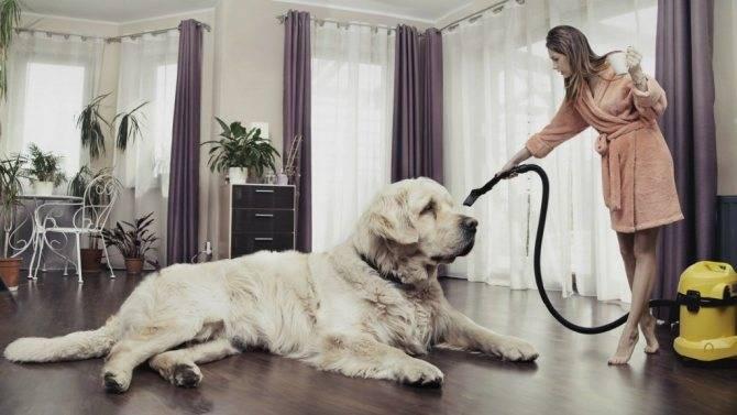 Как избавиться от запаха собаки в квартире: эффективные способы