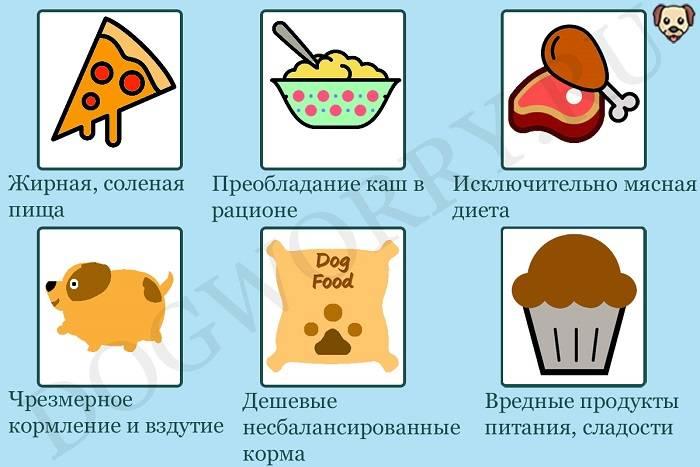Почему щенок ест свои экскременты: причины, что делать