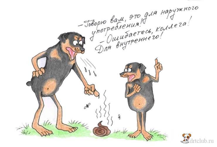 Почему собаки валяются в тухлятине