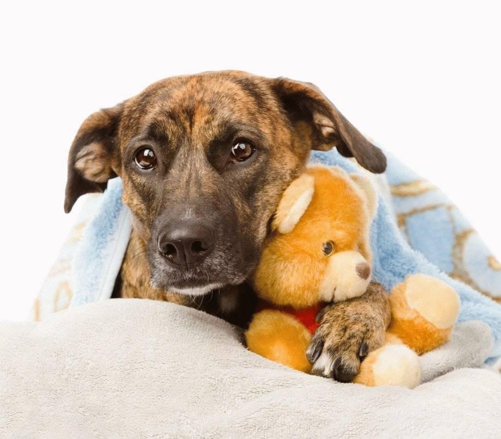 Собака отказывается от еды — ищем и устраняем причину ⋆ собакапедия