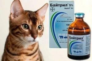 Байтрил для кошек: инструкция по применению
