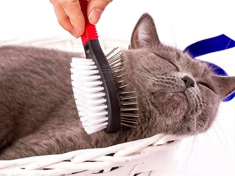 Как убрать шерсть с одежды, в том числе кошачью и без ролика