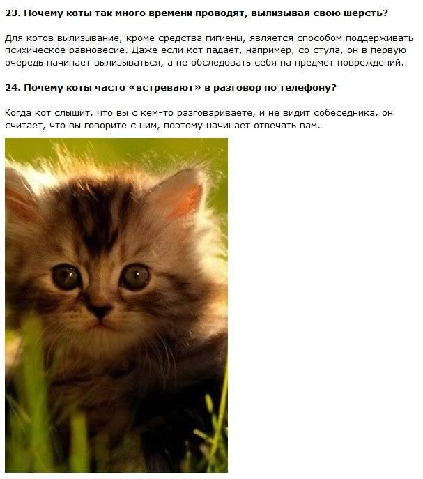 Интересные факты о кошках, фото и видео