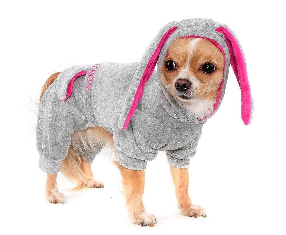 Зачем собаке одежда и как правильно подобрать ее?   русская семерка