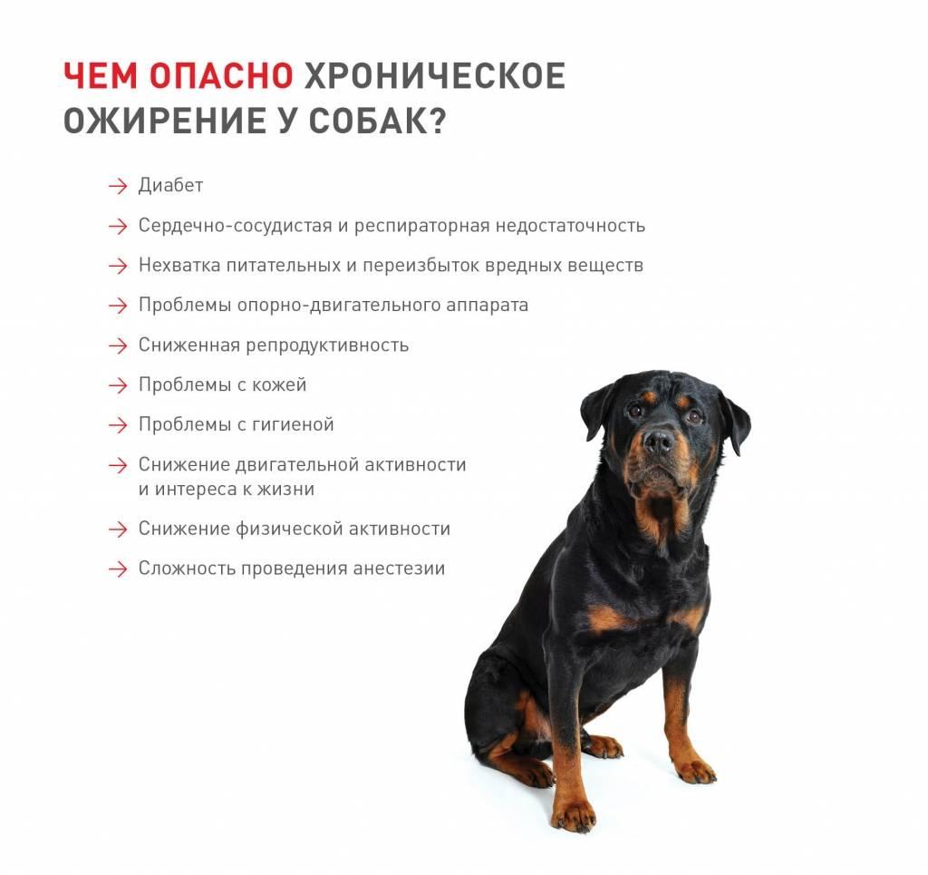 Самые богатые собаки в истории (описание и фото)