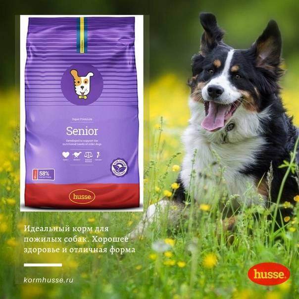 Рейтинг лучших премиум-кормов для собак с ценами и описаниями