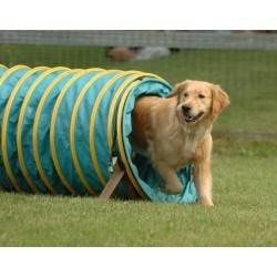 Как научить собаку команде лежать   как обучить, дрессировка, видео