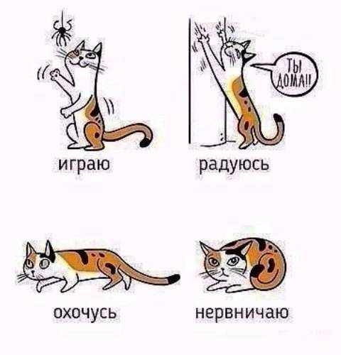Какое значение имеет хвост для кошек и котов | зачем нужен, какую роль играет