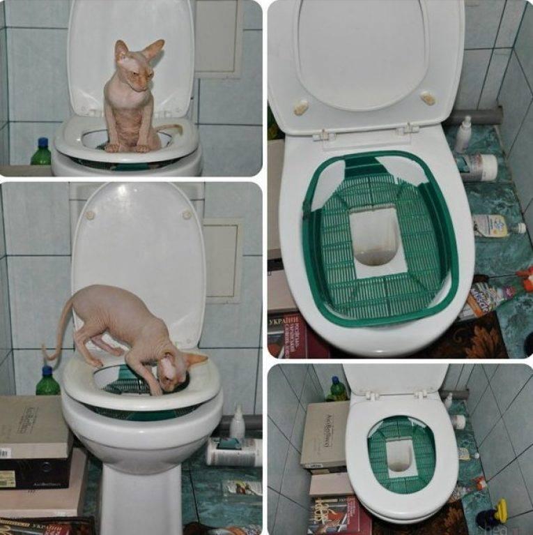 Учим кота ходить на унитаз