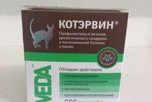 Как приготовить слабительное для кошек в домашних условиях