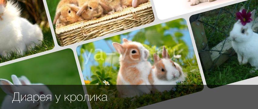 Понос у кролика: причины, лечение, профилактика
