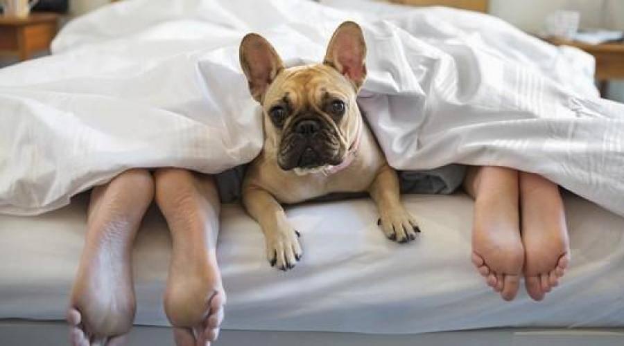 Что делать если собака грызет все подряд в квартире: причины такого поведения