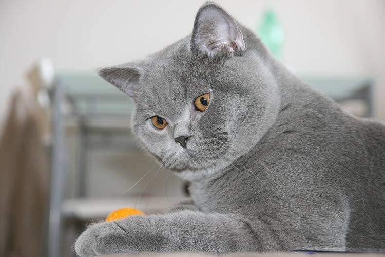 Английские клички для котов и кошек