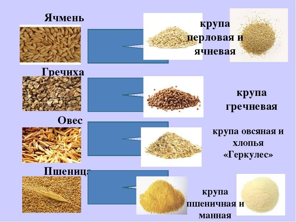 Каши и другие блюда из круп. как правильно варить кашу?