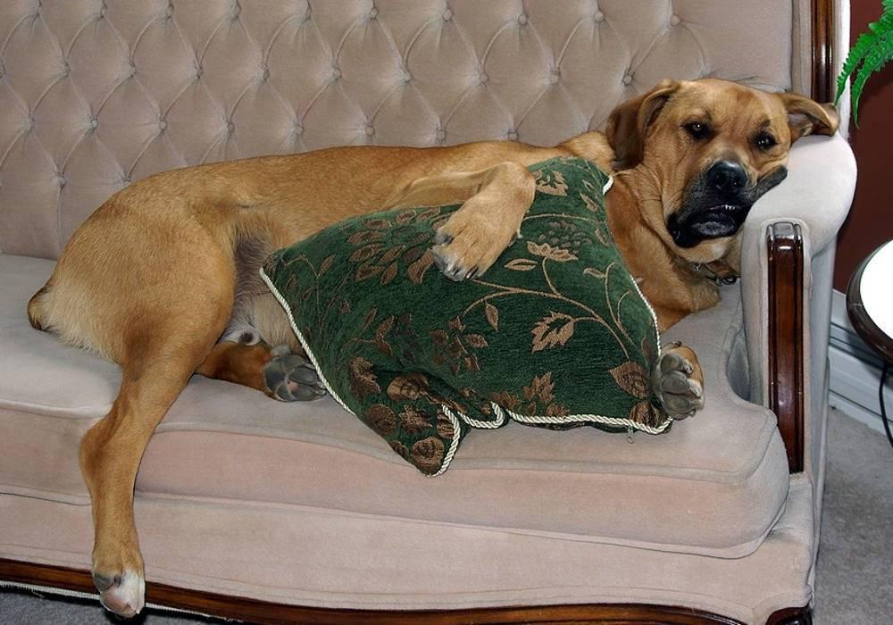 Топ 10 лучших пород собак для содержания в квартире с названиями, описанием и фото