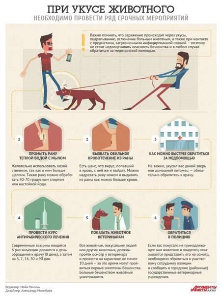 Если укусит собака – что нужно делать?