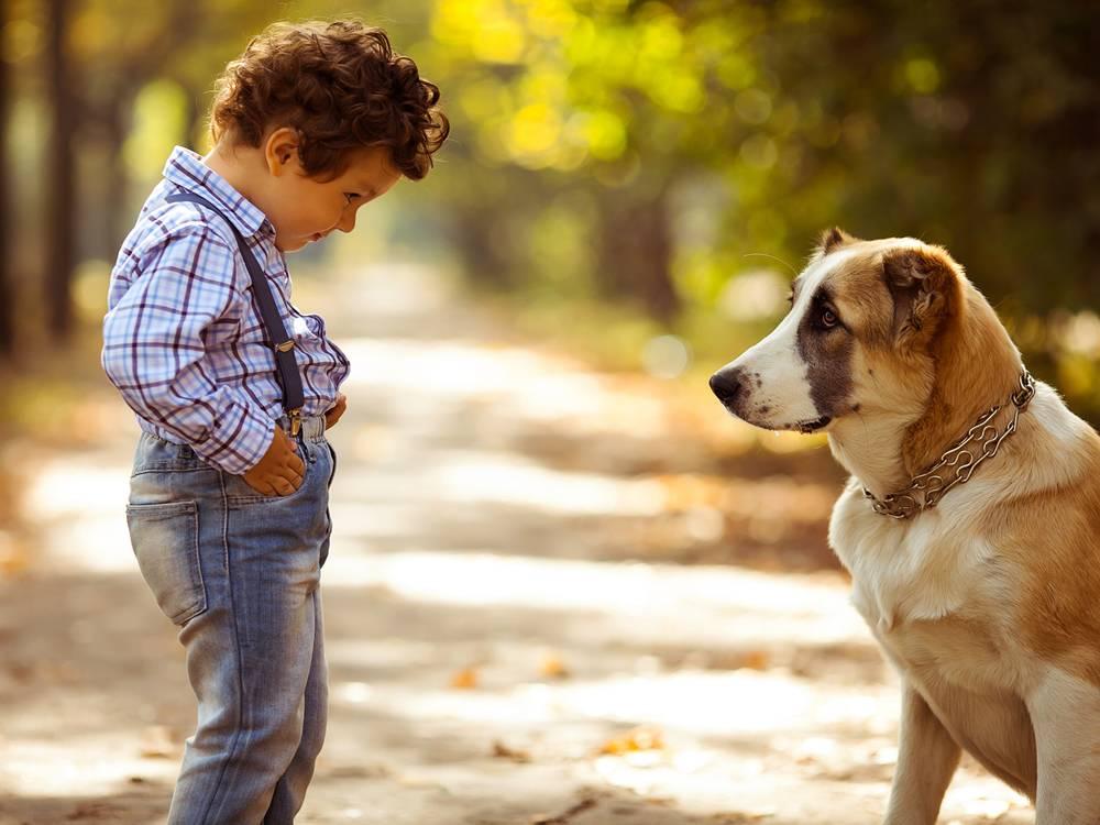 Почему собаки всего боятся: как научить питомца преодолевать страхи