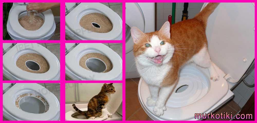 Частое мочеиспускание у кошек - симптомы, лечение, препараты, причины появления | наши лучшие друзья