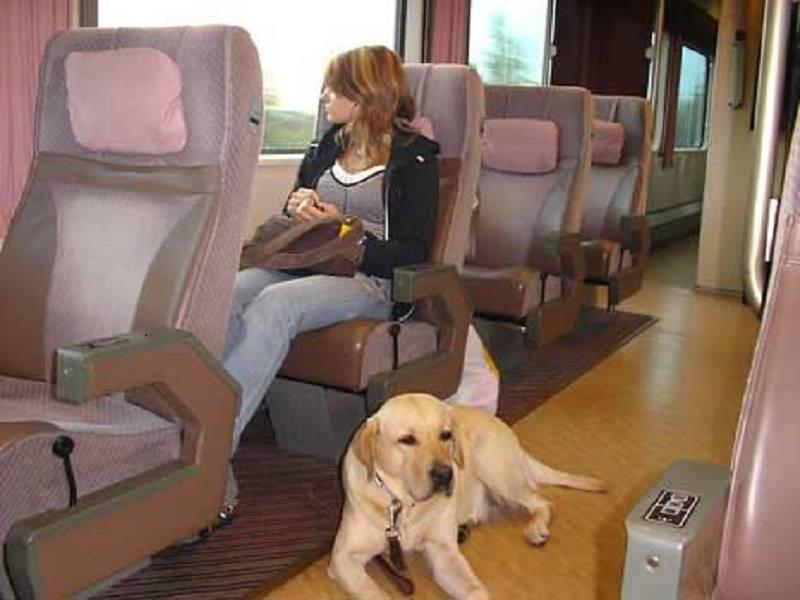 Как перевозить собаку в поездах по россии: эффективные советы
