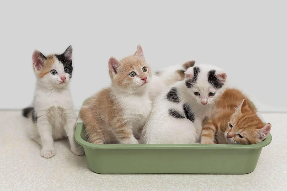 Список правил которые помогут приучить котенка к месту для сна в доме