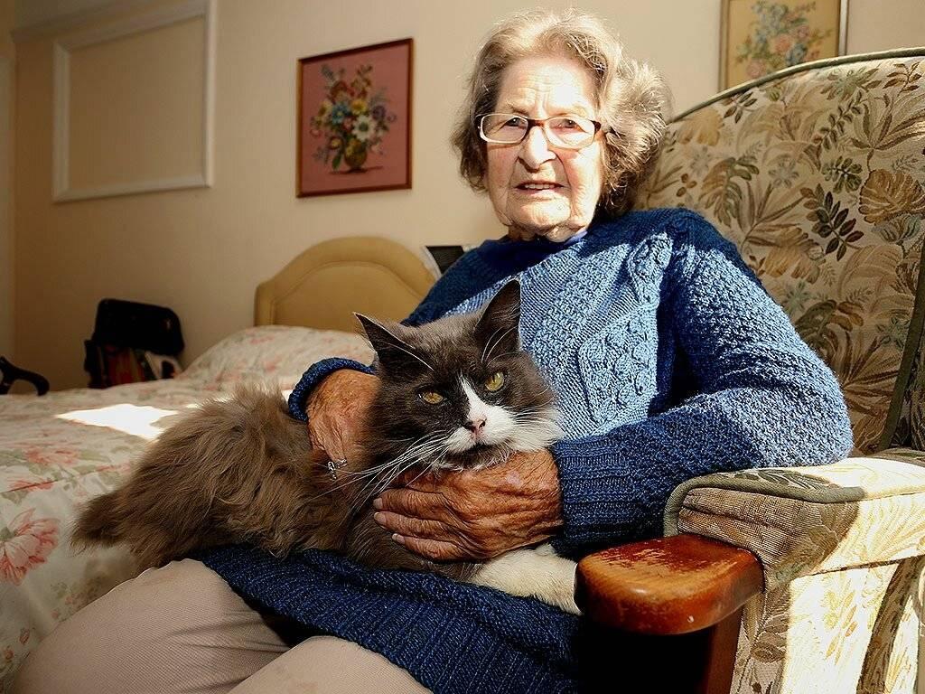 В каком возрасте кошка считается старой - gafki.ru