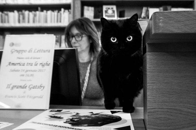 Породы кошек с высоким интеллектом