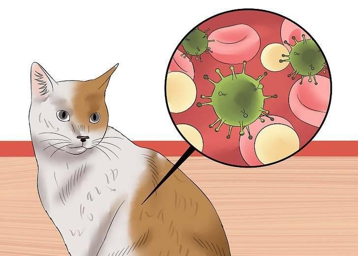 Вирусный иммунодефицит у кошек: симптомы и лечение, опасен ли кошачий спид для человека
