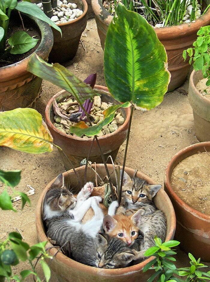 Как отучить кота есть комнатные цветы – лучшие способы сохранения растений